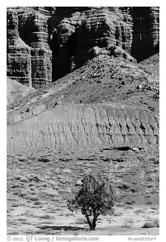 Tree and cliff near Panorama Point. Capitol Reef National Park (black and white)