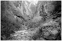 Surprise canyon. Capitol Reef National Park ( black and white)