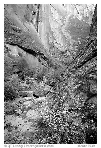Leaves and patterned wall in Surprise canyon. Capitol Reef National Park (black and white)
