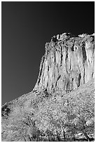 Cottonwods in fall foliage and tall cliffs near Fruita. Capitol Reef National Park, Utah, USA. (black and white)