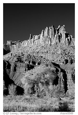 Cottonwods at the base of the Castle during fall. Capitol Reef National Park (black and white)