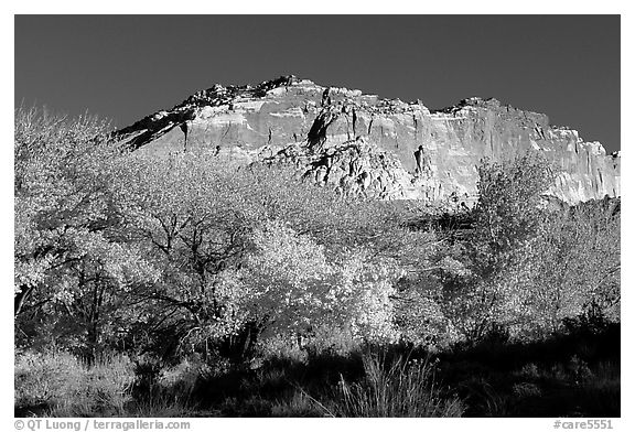 Trees in falls colors and cliffs, Fruita. Capitol Reef National Park (black and white)