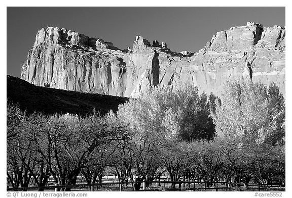 Historic orchard and cliffs. Capitol Reef National Park (black and white)