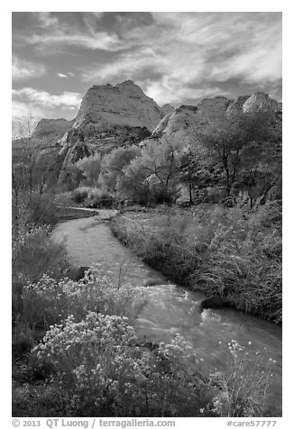 Fremont River, shrubs and trees in fall. Capitol Reef National Park (black and white)