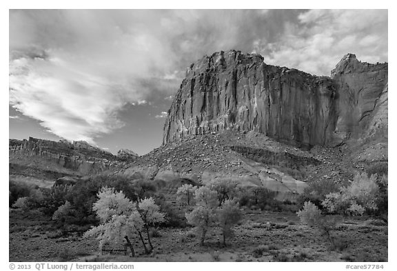 Cliffs towering above Fruita trees in autumn, sunset. Capitol Reef National Park (black and white)