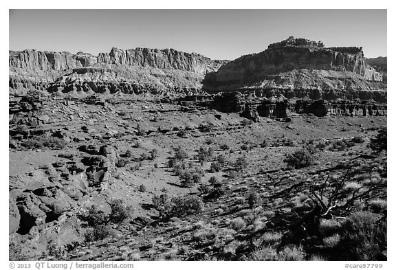 Junipers and Mummy cliffs. Capitol Reef National Park (black and white)