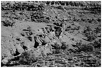 Junipers and red Moenkopi Formation sandstone. Capitol Reef National Park ( black and white)