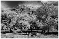 Fruita orchard and cliff in autumn. Capitol Reef National Park ( black and white)