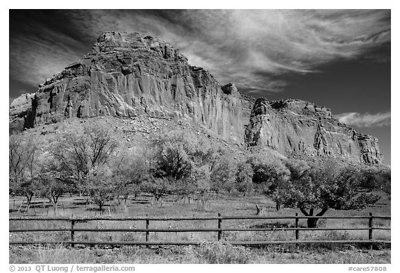 Historic orchard and cliff in autumn, Fruita. Capitol Reef National Park (black and white)