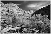 Autumn colors below Capitol Dome. Capitol Reef National Park ( black and white)