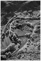 Fruita orchards in the fall, seen from above. Capitol Reef National Park ( black and white)