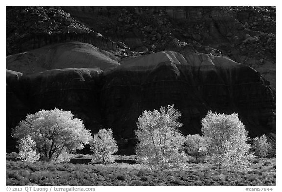 Cottonwood trees in the fall against shale. Capitol Reef National Park (black and white)