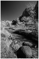 Basalt boulders, Pleasant Creek in the fall. Capitol Reef National Park ( black and white)