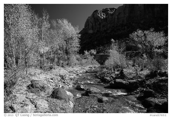 Pleasant Creek, cottowoods, and cliff in autumn. Capitol Reef National Park (black and white)