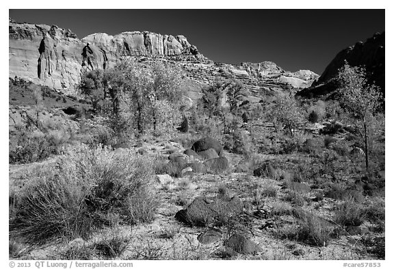 Cottonwoods and desert plants in autumn near Pleasant Creek. Capitol Reef National Park (black and white)