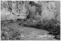 Fremont River, cottonwoods, and cliffs in autumn. Capitol Reef National Park ( black and white)