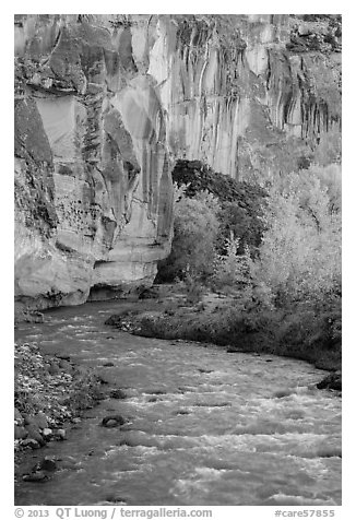 Bend of the Fremont River, cottonwoods, and cliffs in autumn. Capitol Reef National Park (black and white)