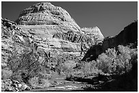 Capitol Dome in autumn. Capitol Reef National Park ( black and white)