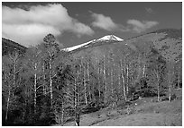 Trees and mountains, Baker Creek, morning spring. Great Basin National Park ( black and white)