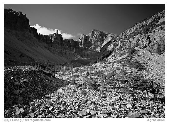 Bristlecone pine and morainic rocks, Wheeler Peak, morning. Great Basin  National Park (black and white)