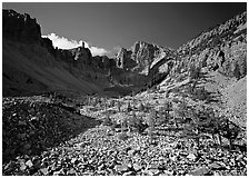 Bristlecone pine and morainic rocks, Wheeler Peak, morning. Great Basin National Park, Nevada, USA. (black and white)