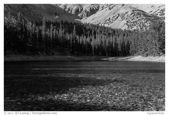 Shadows and conifer forest, Teresa Lake. Great Basin National Park (black and white)