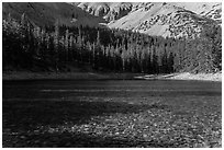 Shadows and conifer forest, Teresa Lake. Great Basin National Park ( black and white)