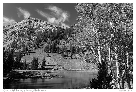 Aspen and Stella Lake. Great Basin National Park (black and white)