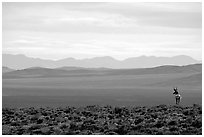 Desert antelope and hazy mountain range. Great Basin National Park ( black and white)