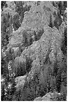 Limestone towers and pine trees near Lexington Arch. Great Basin National Park, Nevada, USA. (black and white)