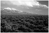 Snake Range and Wheeler Peak above sagebrush flats, from the West. Great Basin National Park ( black and white)