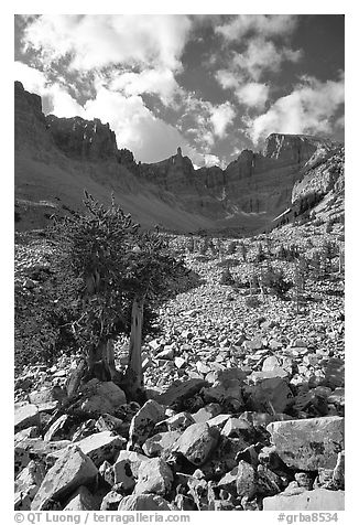 Bristlecone pine and rocks cirque, Wheeler Peak, morning. Great Basin National Park (black and white)