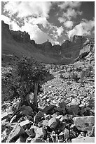 Bristlecone pine and rocks cirque, Wheeler Peak, morning. Great Basin National Park, Nevada, USA. (black and white)