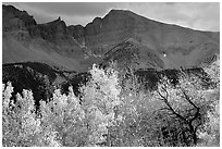 Aspens in fall foliage and Wheeler Peak. Great Basin National Park ( black and white)