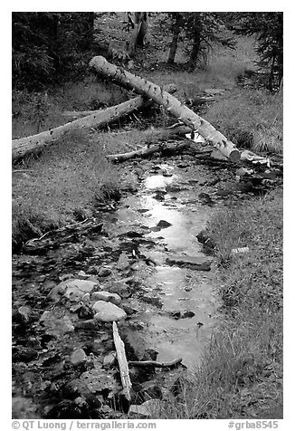 Snake Creek in fall. Great Basin National Park (black and white)
