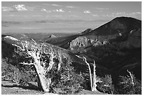 Bristlecone pine trees and Pole Canyon, afternoon. Great Basin National Park, Nevada, USA. (black and white)