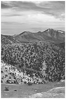 Slopes covered with Bristlecone Pine trees seen from Mt Washington, morning. Great Basin National Park ( black and white)