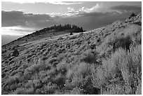 Sage covered slopes at sunset, Snake Range. Great Basin National Park ( black and white)