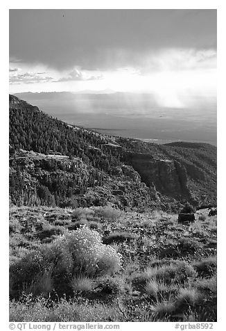 Sage covered slopes above Spring Valley. Great Basin National Park (black and white)