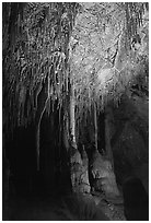 Soda Straws formations in Lehman Cave. Great Basin National Park ( black and white)