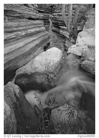 Entrance of Deer Creek Narrows. Grand Canyon National Park (black and white)