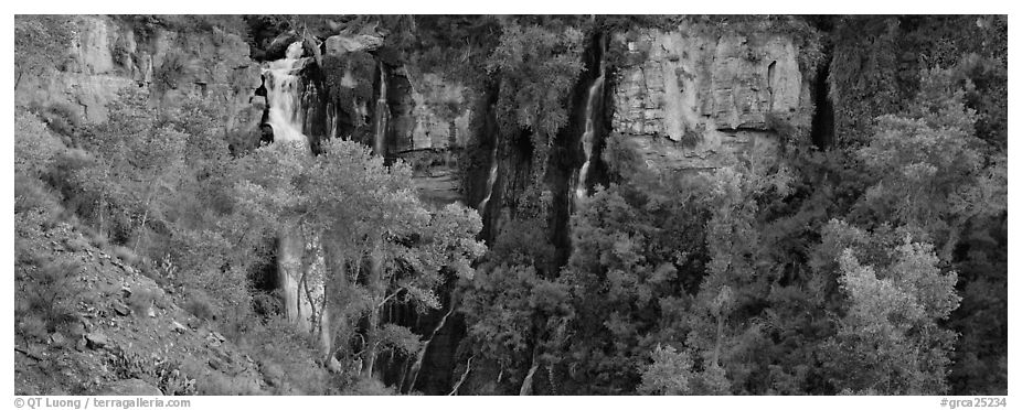 Oasis of trees and Thunder Spring fall. Grand Canyon National Park (black and white)