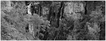 Oasis of trees and Thunder Spring fall. Grand Canyon National Park (Panoramic black and white)
