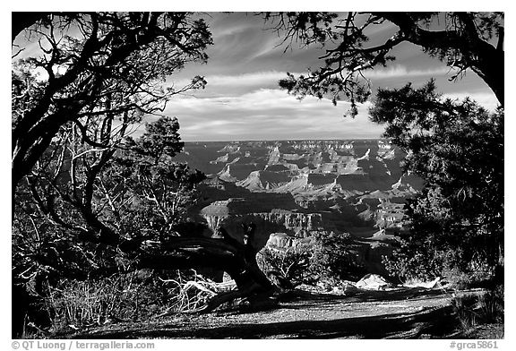 Grand Canyon framed by trees. Grand Canyon National Park (black and white)