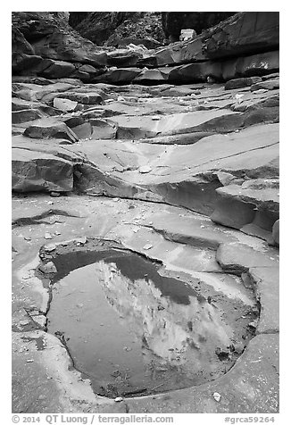 Reflection in pool, North Canyon. Grand Canyon National Park (black and white)
