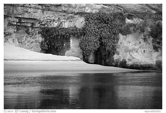 Beach, vegetation, and canyon walls, Marble Canyon. Grand Canyon National Park (black and white)
