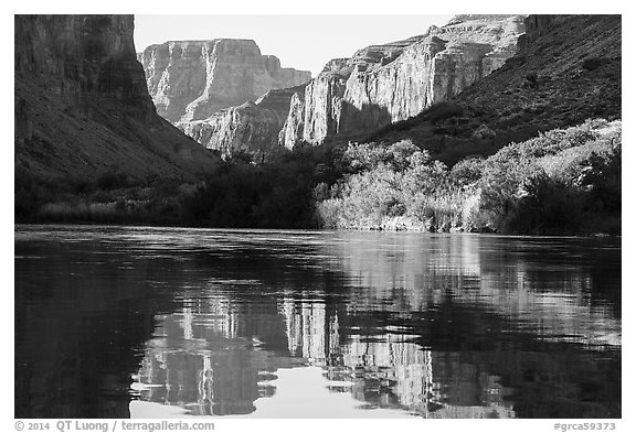Cliffs and vegetation reflected in Colorado River, morning. Grand Canyon National Park (black and white)