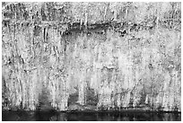 Salt stalagtites on riverside cliff. Grand Canyon National Park ( black and white)