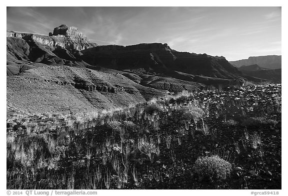 Dark plateau with sparse grasses, early morning. Grand Canyon National Park (black and white)
