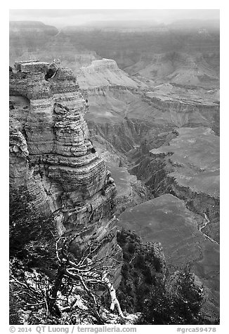 Snow on branches and Mather Point. Grand Canyon National Park (black and white)